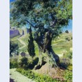 An olive tree in the garden of gethsemane