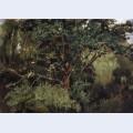 Akhtyrsky oak