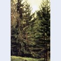 Edge of the spruce forest