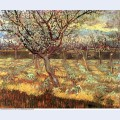 Apricot trees in blossom 1888 1