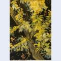 Blossoming acacia branches 1890 1