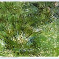 Clumps of grass 1889 1