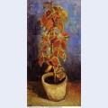 Coleus plant in a flowerpot 1886 1