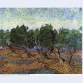 Olive grove 1889 1