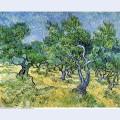 Olive grove 1889