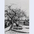 Parsonage garden 1884 1