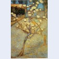 Pear tree in blossom 1888