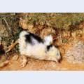 John ruskin s dead chick